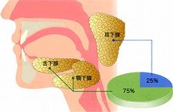 唾液腺の症例
